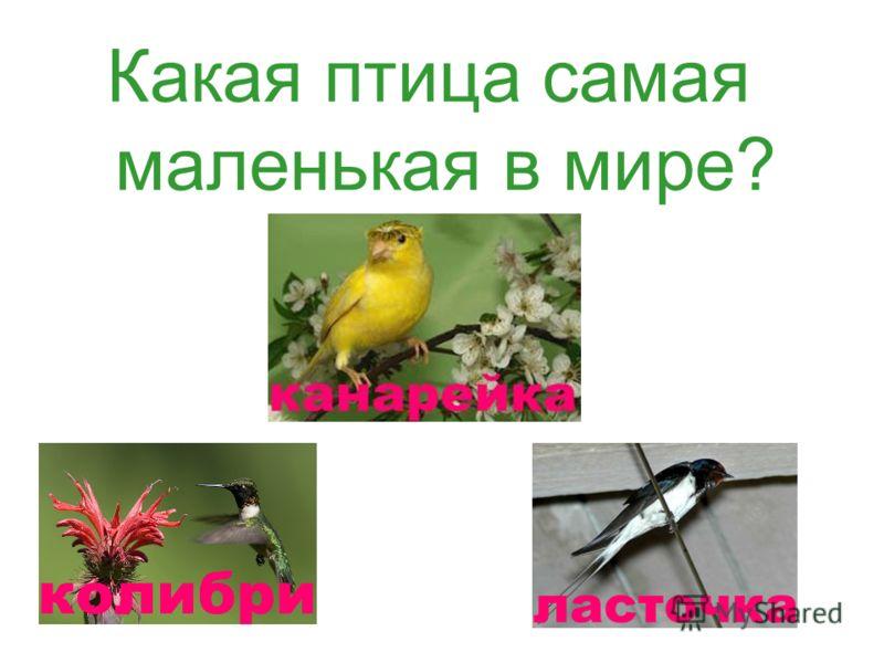Какая птица самая маленькая в мире?