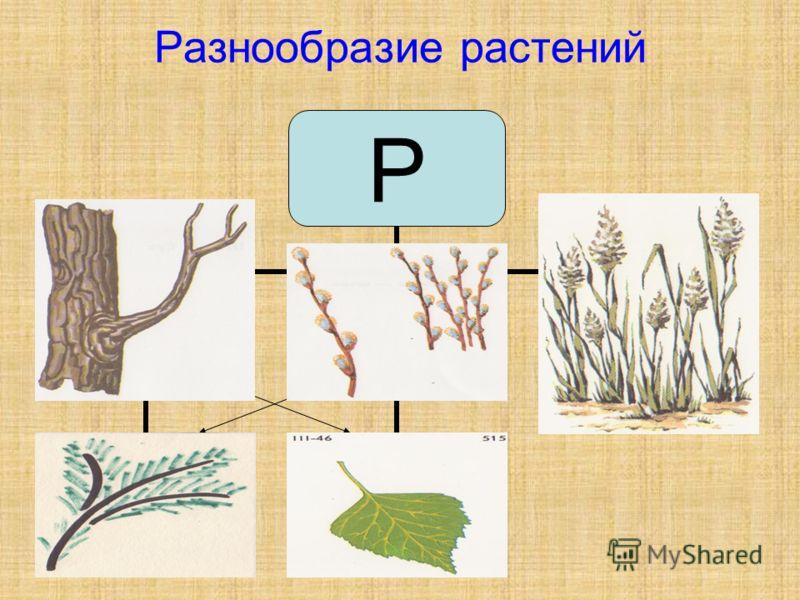 Разнообразие растений Р