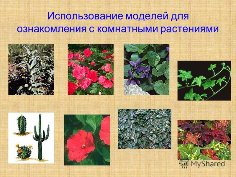 Использование моделей для ознакомления с комнатными растениями