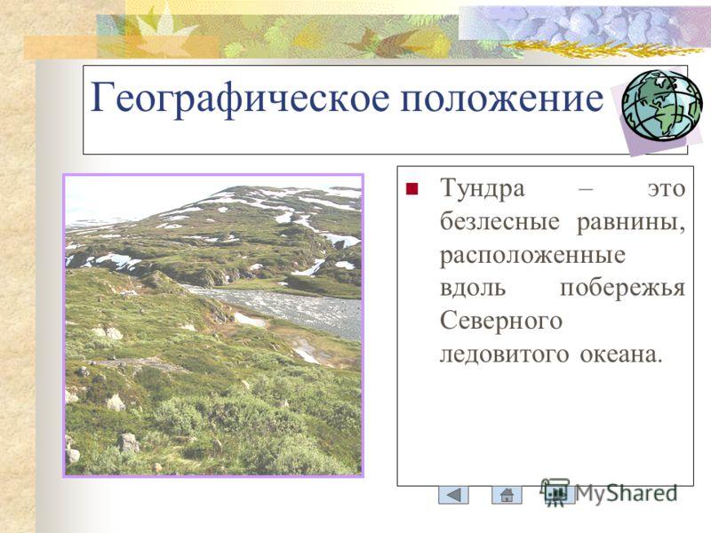 Географическое положение Тундра – это безлесные равнины, расположенные вдоль побережья Северного ледовитого океана.
