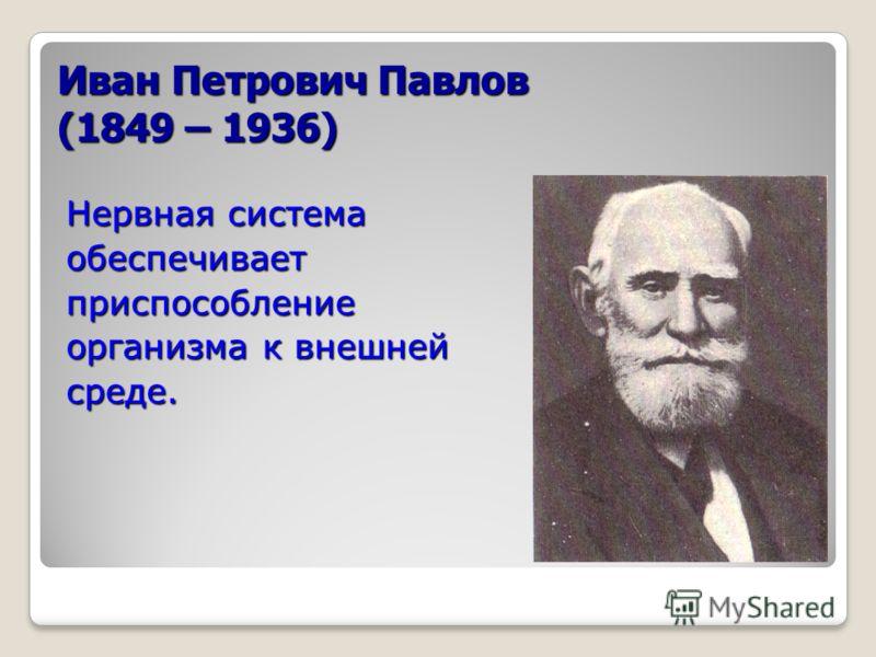Иван Петрович Павлов (1849 – 1936) Нервная система обеспечиваетприспособление организма к внешней среде.