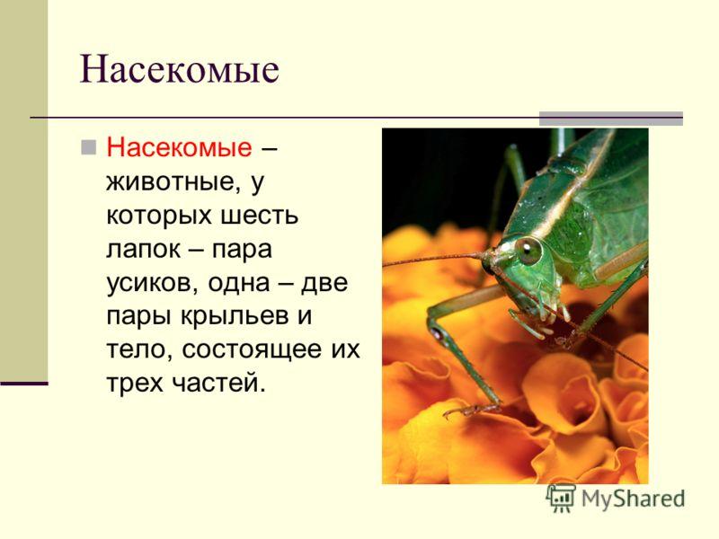 Насекомые Насекомые – животные, у которых шесть лапок – пара усиков, одна – две пары крыльев и тело, состоящее их трех частей.