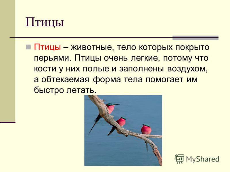 Птицы Птицы – животные, тело которых покрыто перьями. Птицы очень легкие, потому что кости у них полые и заполнены воздухом, а обтекаемая форма тела помогает им быстро летать.