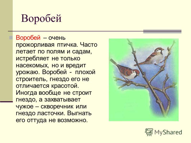 Воробей Воробей – очень прожорливая птичка. Часто летает по полям и садам, истребляет не только насекомых, но и вредит урожаю. Воробей - плохой строитель, гнездо его не отличается красотой. Иногда вообще не строит гнездо, а захватывает чужое – скворе