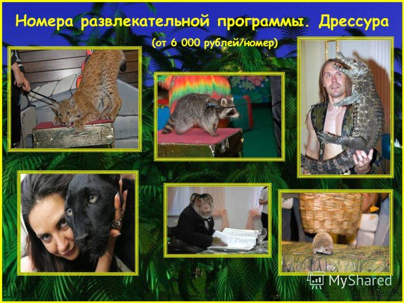 Номера развлекательной программы. Дрессура (от 6 000 рублей/номер)