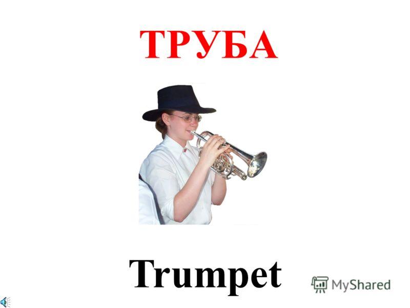 ТРУБА Trumpet