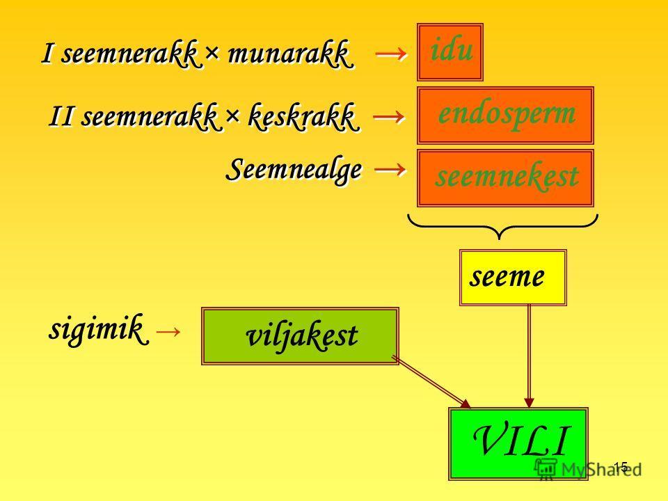 15 I seemnerakk × munarakk II seemnerakk × keskrakk seeme Seemnealge idu endosperm seemnekest viljakest sigimik VILI