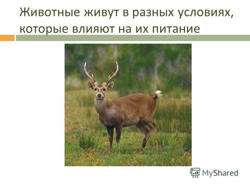Питание животных урок 32 животные