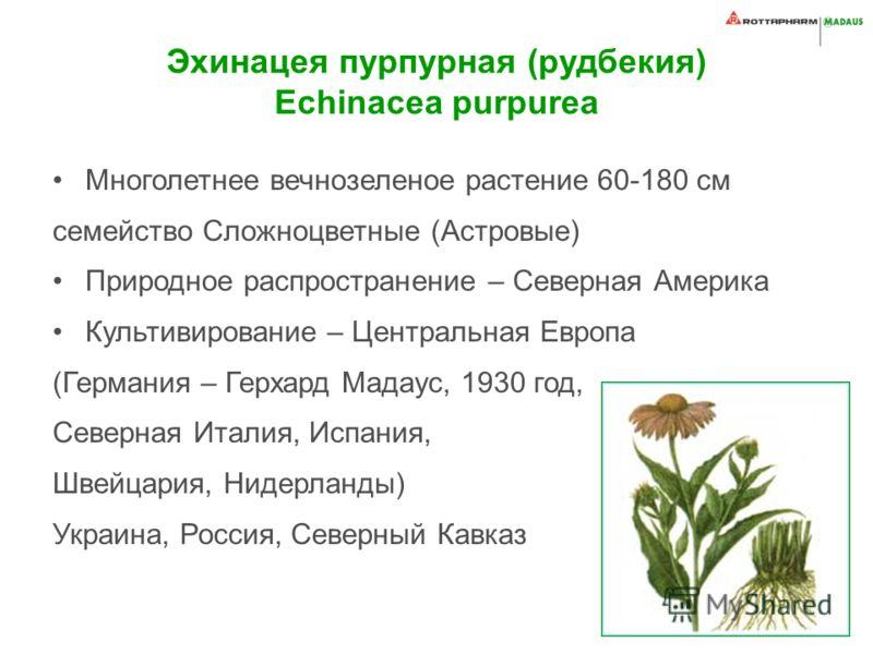 Эхинацея пурпурная (рудбекия) Echinacea purpurea Многолетнее вечнозеленое растение 60-180 см семейство Сложноцветные (Астровые) Природное распространение – Северная Америка Культивирование – Центральная Европа (Германия – Герхард Мадаус, 1930 год, Се