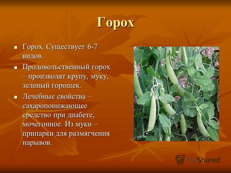 Горох Горох. Существует 6-7 видов. Горох. Существует 6-7 видов. Продовольственный горох – производят крупу, муку, зеленый горошек. Продовольственный горох – производят крупу, муку, зеленый горошек. Лечебные свойства – сахаропонижающее средство при ди