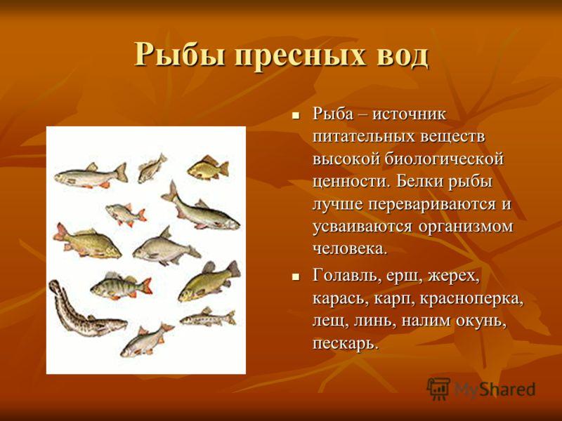 Рыбы пресных вод Рыба – источник питательных веществ высокой биологической ценности. Белки рыбы лучше перевариваются и усваиваются организмом человека. Рыба – источник питательных веществ высокой биологической ценности. Белки рыбы лучше перевариваютс