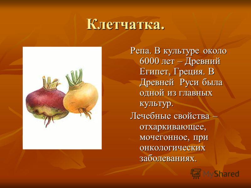 Клетчатка. Репа. В культуре около 6000 лет – Древний Египет, Греция. В Древней Руси была одной из главных культур. Лечебные свойства – отхаркивающее, мочегонное, при онкологических заболеваниях.