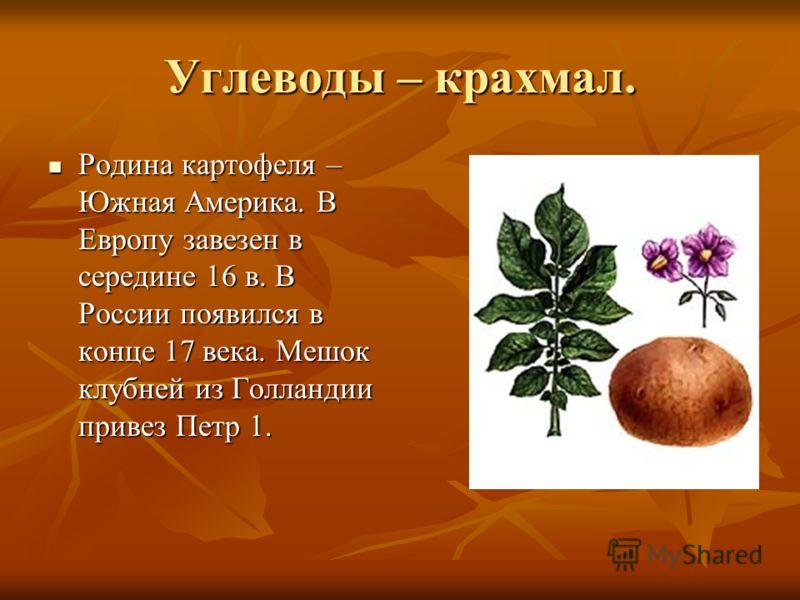 Углеводы – крахмал. Родина картофеля – Южная Америка. В Европу завезен в середине 16 в. В России появился в конце 17 века. Мешок клубней из Голландии привез Петр 1. Родина картофеля – Южная Америка. В Европу завезен в середине 16 в. В России появился