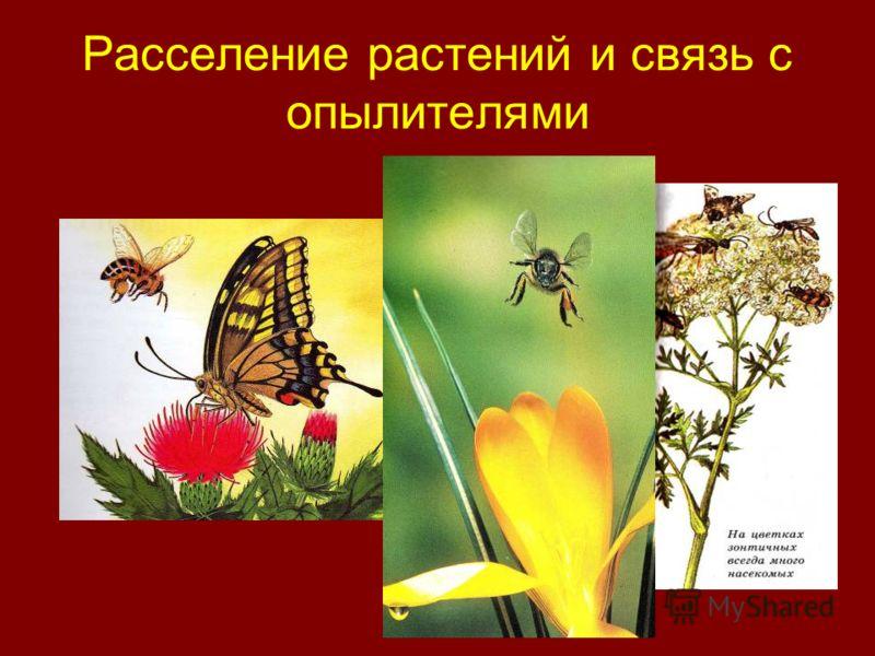 Расселение растений и связь с опылителями