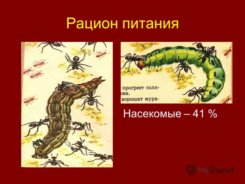 Рацион питания Насекомые – 41 %