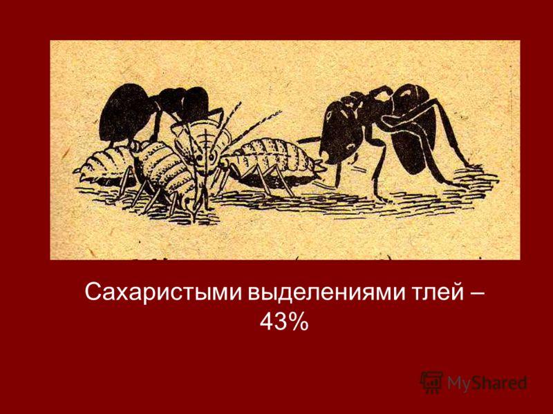 Сахаристыми выделениями тлей – 43%