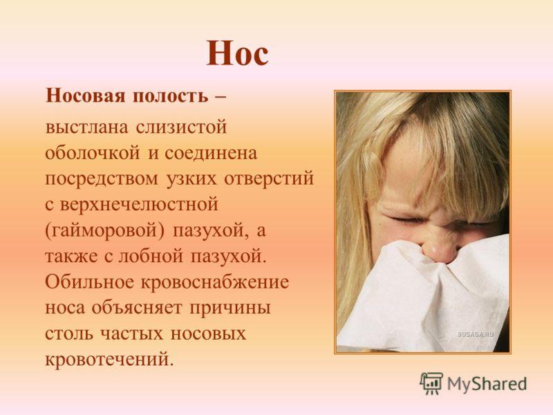 Нос Носовая полость – выстлана слизистой оболочкой и соединена посредством узких отверстий с верхнечелюстной (гайморовой) пазухой, а также с лобной пазухой. Обильное кровоснабжение носа объясняет причины столь частых носовых кровотечений.