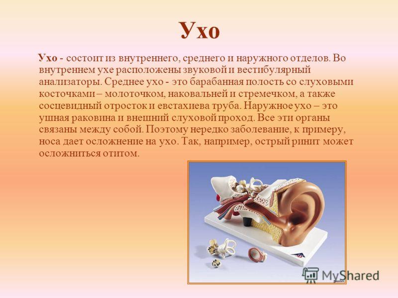 Ухо Ухо - состоит из внутреннего, среднего и наружного отделов. Во внутреннем ухе расположены звуковой и вестибулярный анализаторы. Среднее ухо - это барабанная полость со слуховыми косточками – молоточком, наковальней и стремечком, а также сосцевидн