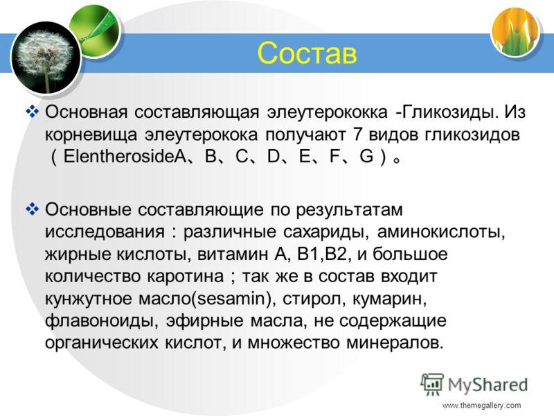 www.themegallery.com Состав Основная составляющая элеутерококка -Гликозиды. Из корневища элеутерокока получают 7 видов гликозидов ElentherosideA B C D E F G Основные составляющие по результатам исследования различные сахариды, аминокислоты, жирные ки