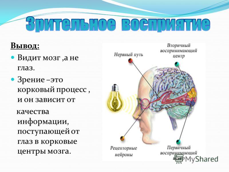 Вывод: Видит мозг,а не глаз. Зрение –это корковый процесс, и он зависит от качества информации, поступающей от глаз в корковые центры мозга.