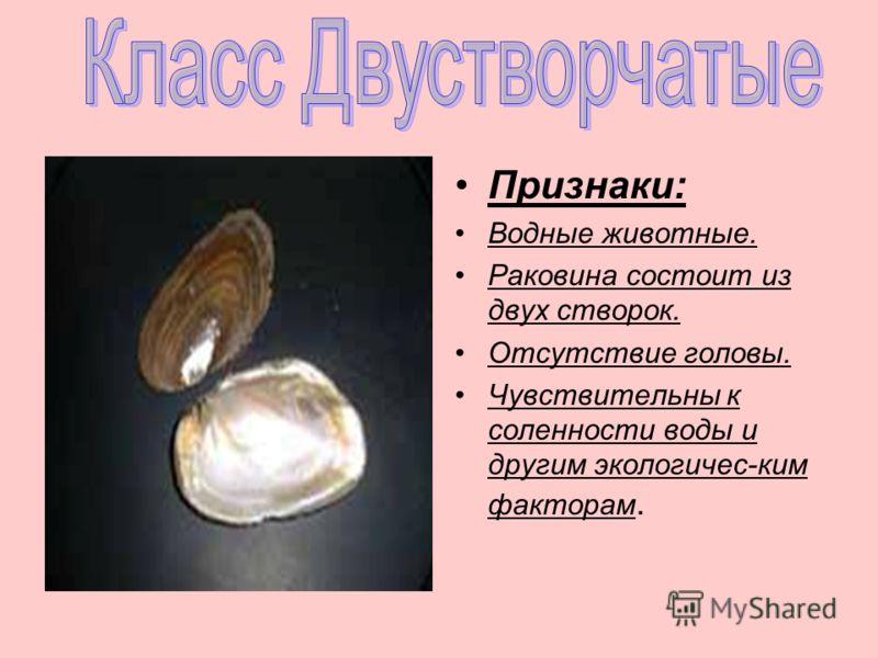 Признаки: Водные животные. Раковина состоит из двух створок. Отсутствие головы. Чувствительны к соленности воды и другим экологичес-ким факторам.