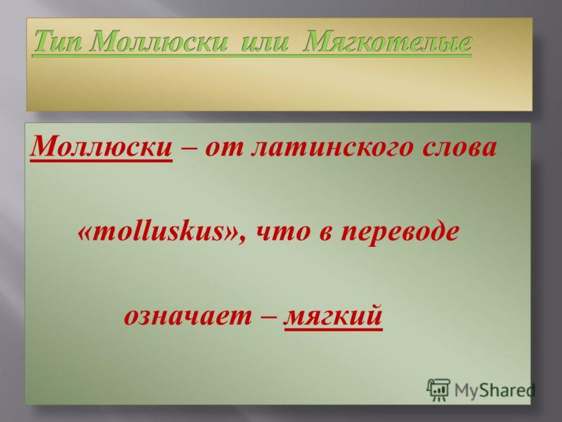 Моллюски – от латинского слова « molluskus », что в переводе означает – мягкий