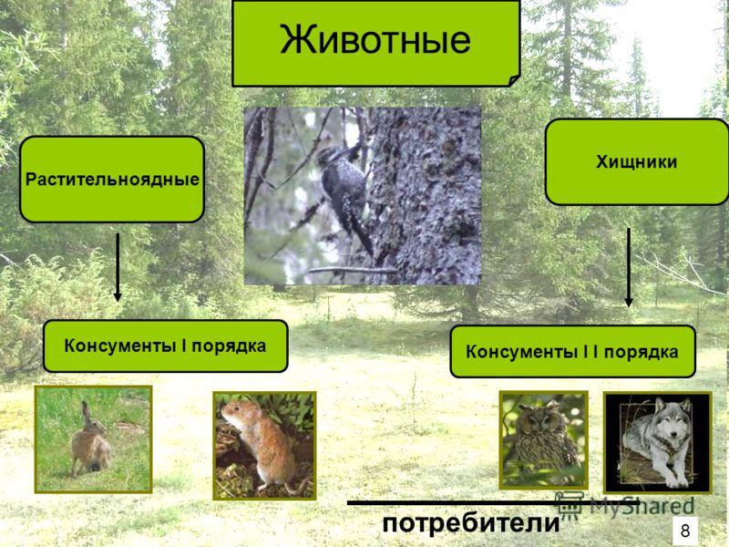 Животные Растительноядные Хищники Консументы I порядка Консументы I I порядка потребители 8