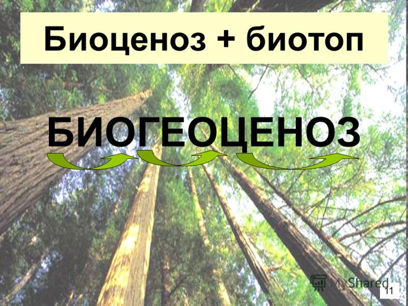 Биоценоз + биотоп БИОГЕОЦЕНОЗ 11