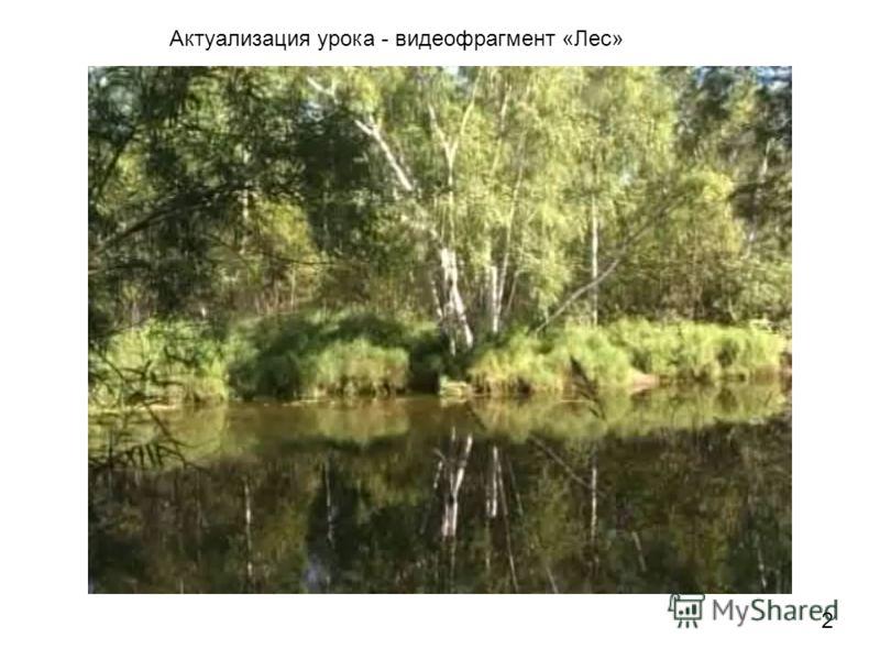 Актуализация урока - видеофрагмент «Лес» 2