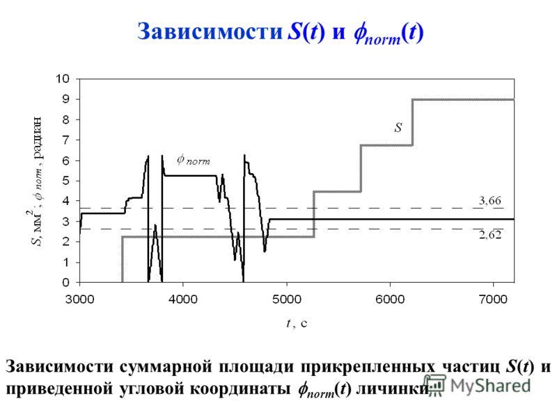 Зависимости суммарной площади прикрепленных частиц S(t) и приведенной угловой координаты norm (t) личинки Зависимости S(t) и norm (t)