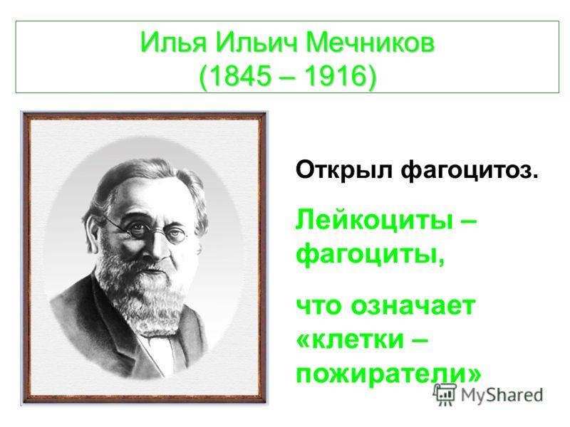 Илья Ильич Мечников (1845 – 1916) Открыл фагоцитоз. Лейкоциты – фагоциты, что означает «клетки – пожиратели»