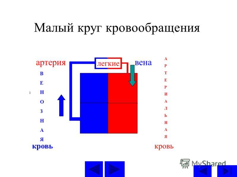 Малый круг кровообращения легкие вена А Р Т Е Р И А Л Ь Н А Я кровь артерия В Е Н О З Н А Я кровь
