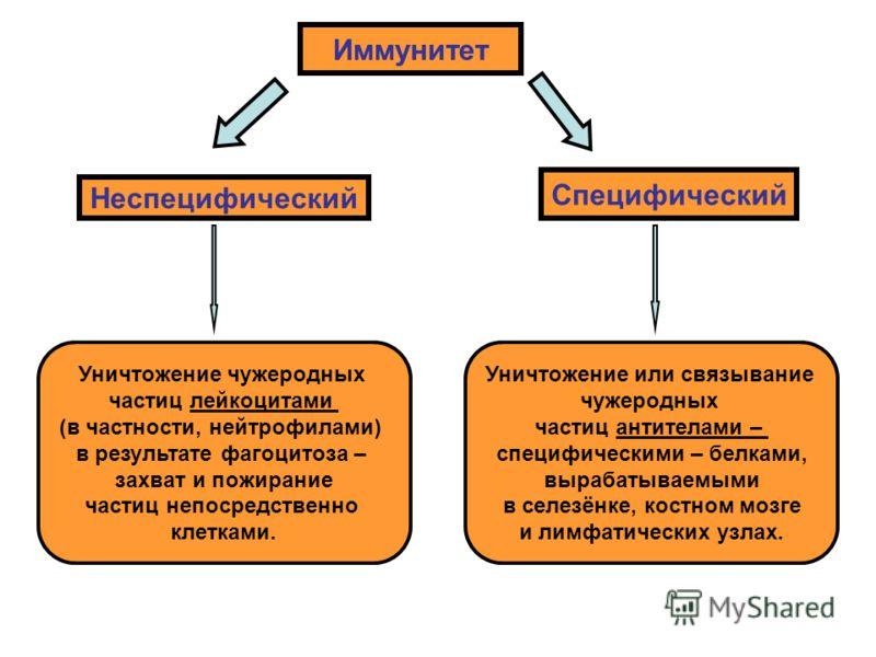 Специфические механизмы иммунитета