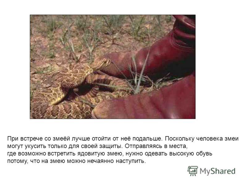 При встрече со змеёй лучше отойти от неё подальше. Поскольку человека змеи могут укусить только для своей защиты. Отправляясь в места, где возможно встретить ядовитую змею, нужно одевать высокую обувь потому, что на змею можно нечаянно наступить. При