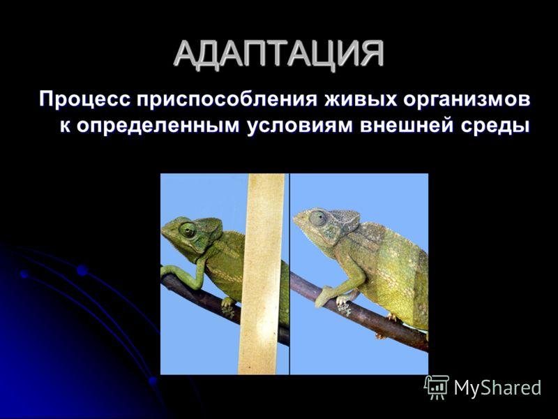 АДАПТАЦИЯ Процесс приспособления живых организмов к определенным условиям внешней среды