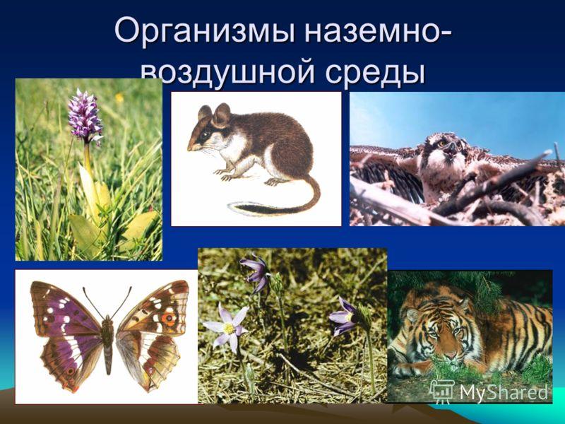 Организмы наземно- воздушной среды