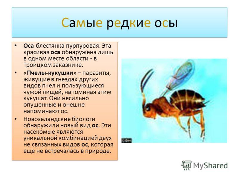 редкие паразиты в организме человека
