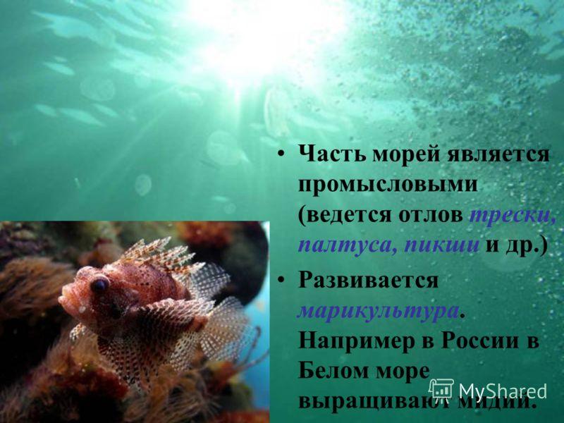 Часть морей является промысловыми (ведется отлов трески, палтуса, пикши и др.) Развивается марикультура. Например в России в Белом море выращивают мидий.