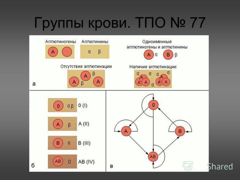 Группы крови. ТПО 77