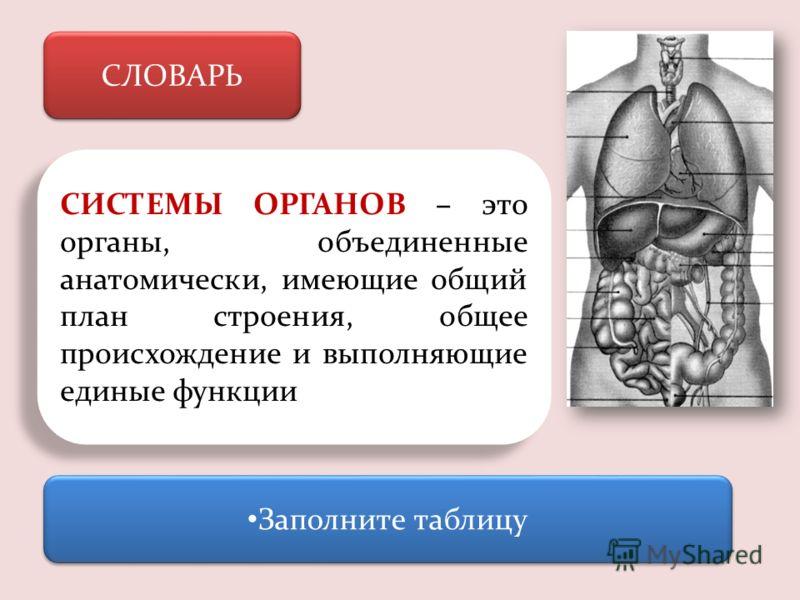 СЛОВАРЬ СИСТЕМЫ ОРГАНОВ – это органы, объединенные анатомически, имеющие общий план строения, общее происхождение и выполняющие единые функции Заполните таблицу