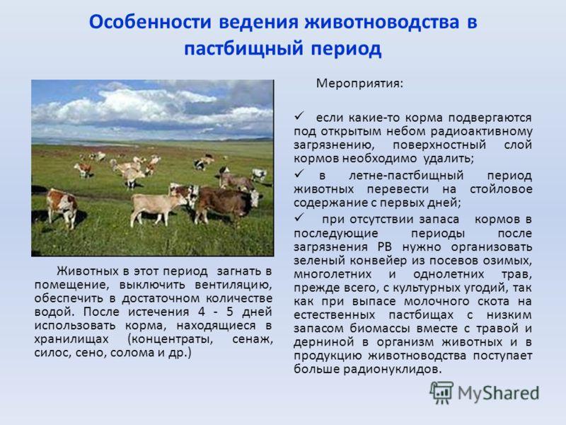 Особенности ведения животноводства в пастбищный период Животных в этот период загнать в помещение, выключить вентиляцию, обеспечить в достаточном количестве водой. После истечения 4 - 5 дней использовать корма, находящиеся в хранилищах (концентраты,