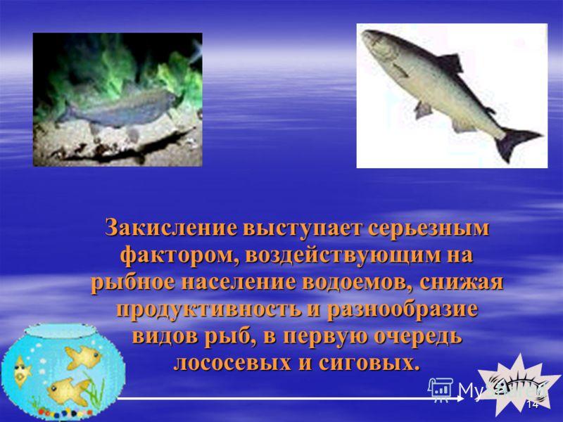 14 Закисление выступает серьезным фактором, воздействующим на рыбное население водоемов, снижая продуктивность и разнообразие видов рыб, в первую очередь лососевых и сиговых. Закисление выступает серьезным фактором, воздействующим на рыбное население