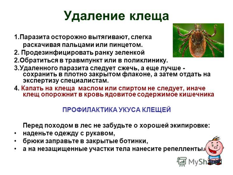 Удаление клеща 1.Паразита осторожно вытягивают, слегка раскачивая пальцами или пинцетом. 2. Продезинфицировать ранку зеленкой 2.Обратиться в травмпункт или в поликлинику. 3.Удаленного паразита следует сжечь, а еще лучше - сохранить в плотно закрытом