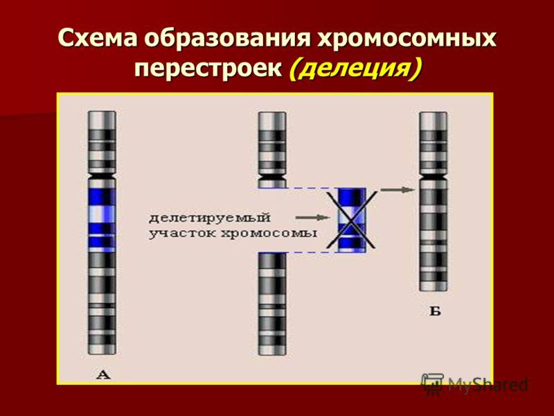 Схема образования хромосомных перестроек (делеция)