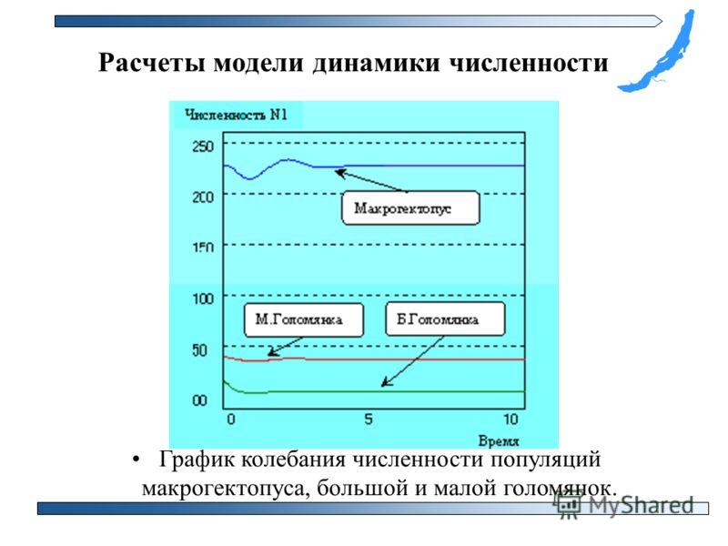 График колебания численности популяций макрогектопуса, большой и малой голомянок. Расчеты модели динамики численности