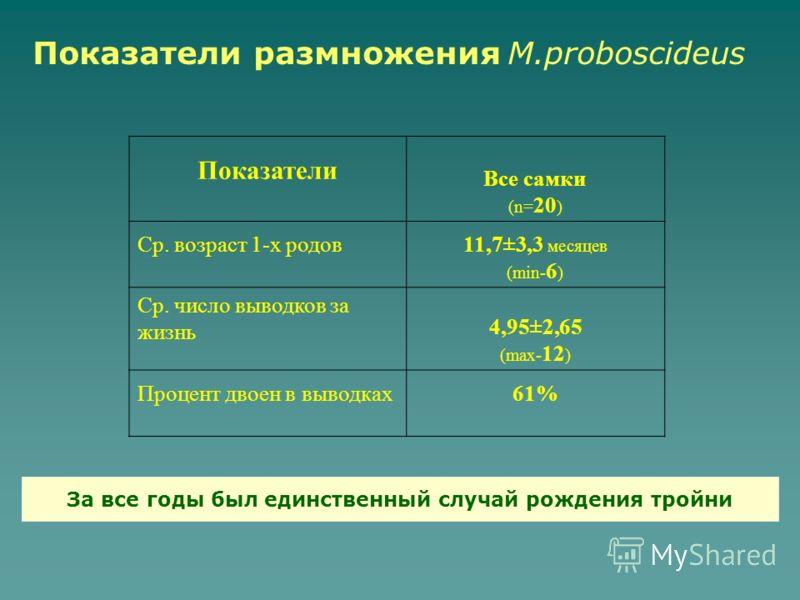 Показатели Все самки (n= 20 ) Ср. возраст 1-х родов11,7±3,3 месяцев (min- 6 ) Ср. число выводков за жизнь 4,95±2,65 (max- 12 ) Процент двоен в выводках61% За все годы был единственный случай рождения тройни Показатели размножения M.proboscideus
