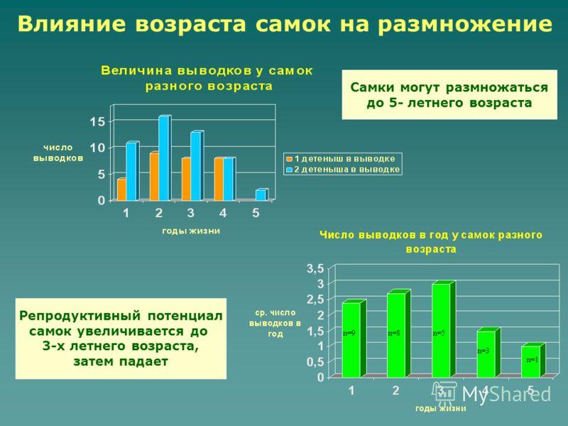 Влияние возраста самок на размножение Репродуктивный потенциал самок увеличивается до 3-х летнего возраста, затем падает n=9n=8n=5 n=3 n=1 Самки могут размножаться до 5- летнего возраста