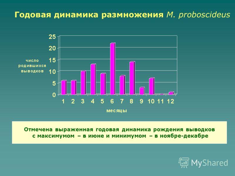 Годовая динамика размножения M. proboscideus Отмечена выраженная годовая динамика рождения выводков с максимумом – в июне и минимумом – в ноябре-декабре
