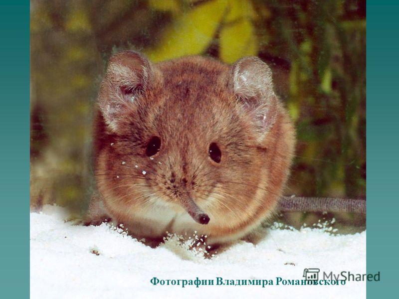 Фотографии Владимира Романовского