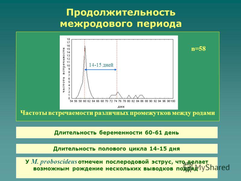 Продолжительность межродового периода Частоты встречаемости различных промежутков между родами Длительность беременности 60-61 день n=58 14-15 дней Длительность полового цикла 14-15 дня У M. proboscideus отмечен послеродовой эструс, что делает возмож